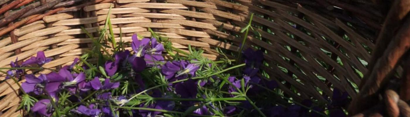 Mission d information sur le développement de l herboristerie